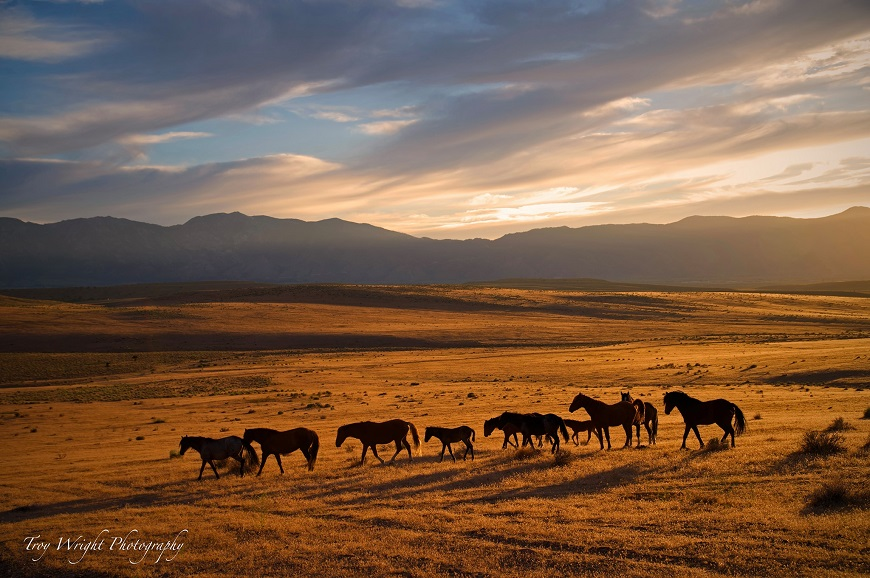 troy wright sunset wild horses